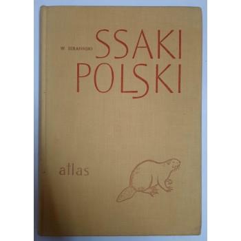 Ssaki Polski Serafiński